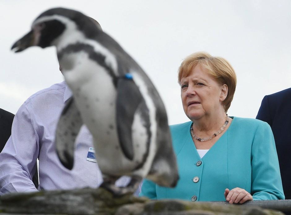"""Angela Merkel zu Besuch im Stralsunder """"Ozeanum"""" – und in Gesellschaft eines Pinguins"""