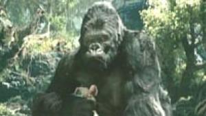 """Ein Künstlerdrama: """"King Kong"""""""