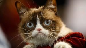 Abschied vom Star eines Katzenimperiums