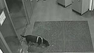 Polizei sucht mit Hunde-Fahndungsfoto