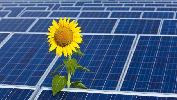 Solarzellen nach Schmetterlingsart