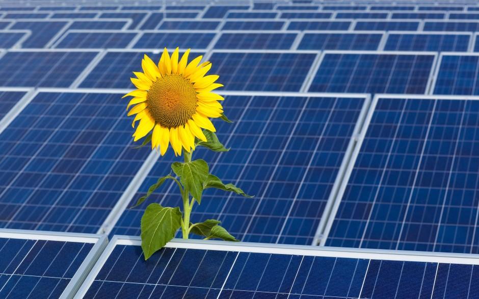 Solarpark bei Frankfurt an der Order