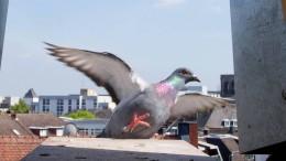 Ein Heim für die Tauben