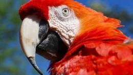 Mehr als zwei Drittel der Tierwelt seit 1970 vernichtet