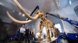 Ein Mastodon zieht nach Amerika um