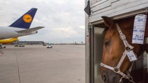 Leckerli und Kuscheldecke für den Flug