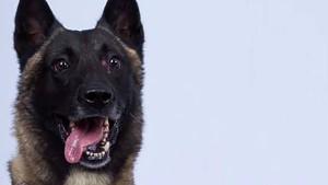 Trump lobt Armeehund für Jagd auf al Bagdadi
