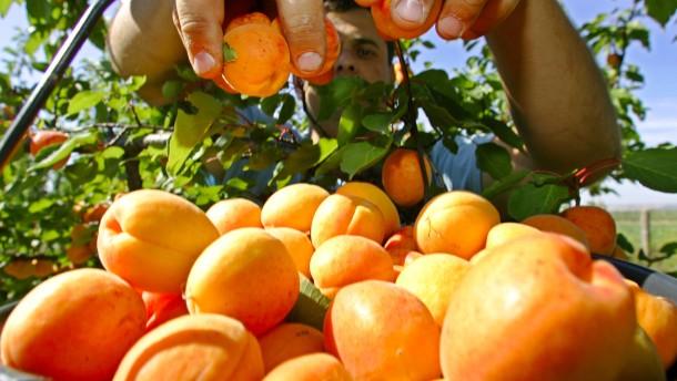 Altes Land, neue Früchte
