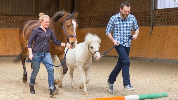 Für wen ist ein Pferdecoaching sinnvoll?