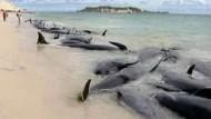 Kampf um das Leben gestrandeter Wale