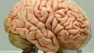 Zentrum der Gefühle: das Gehirn