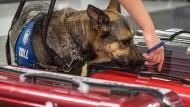 Eine Nase für verdächtiges Gepäck: ein Drogenspürhund des Zolls.