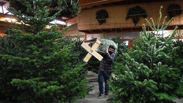 Viele Weihnachtsbäume mit Pestiziden belastet