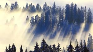 Eine Dosis Wald