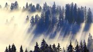 Wer in diesen Tagen durch einen solchen Winterwald spazieren geht, der soll laut Forschern gesünder wieder herauskommen.
