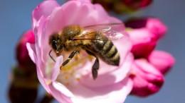 EU-Gerichtshof bestätigt Verbot von Insektiziden