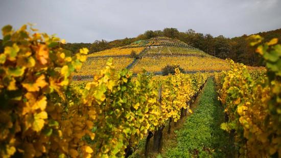 Sächsischer Wein als Exportschlager