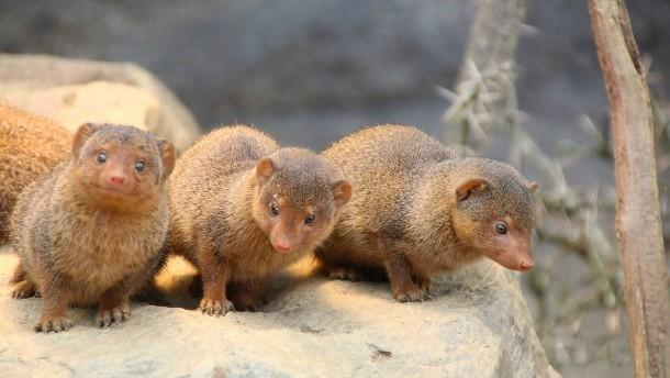 Wuseliger Nachwuchs im Opel-Zoo