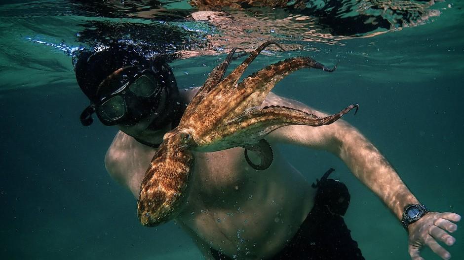 Eingetaucht: Der Filmemacher Craig Foster hat vor der Küste Südafrikas ein Jahr lang einen Octopus in offener See immer wieder begleitet.