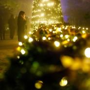 Es muss nicht gleich so üppig sein wie im Königlichen Botanischen Garten in Madrid, um im eigenen Garten Wohlfühlatmosphäre mit Licht zu schaffen.