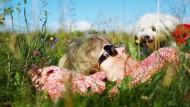 Sonne, weiches Gras und Urlaub: Diese Idylle im Schwarzwald wird gestört von der Gefahr, die von Zecken ausgeht.