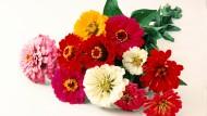Schönes für die Vase