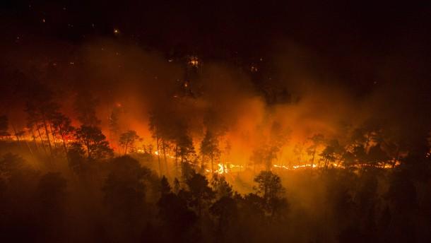 Waldbrände nehmen endlich ab