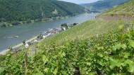 Schön sicher: der Rheingau - hier im Blick mit Weinbergen über Assmannshausen