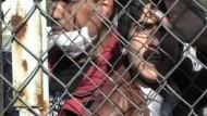 Grenzzaun gegen illegale EU-Einwanderung