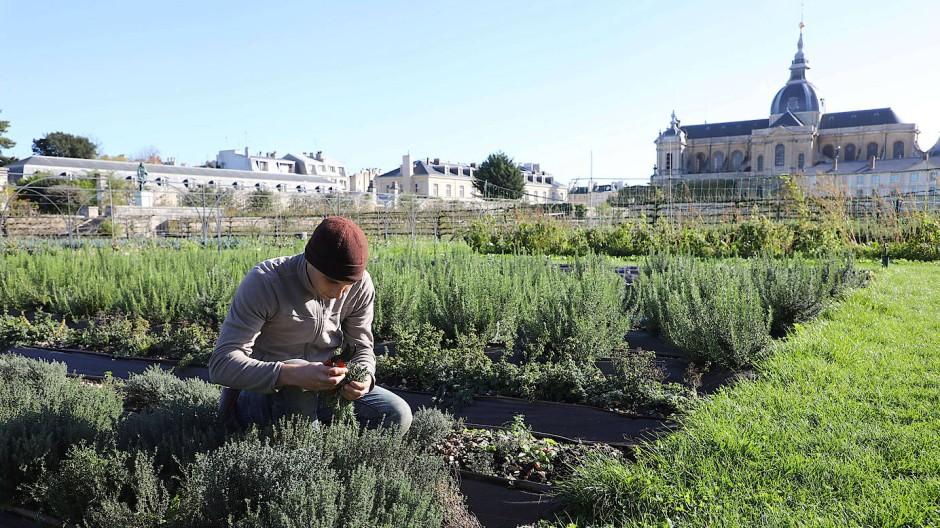 Königliche Kräuterbeete: Der Potager du Roi im französischen Versailles ist der größte Küchengarten seiner Art in Europa.