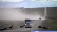 Archiv-Video: Bushs Ölpläne bedrohen Alaska