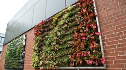 Pflanzen auf Fassade verbessern Stadtklima