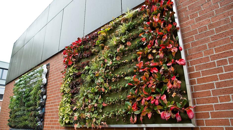Modulare Pflanzsysteme sollen das Klima verbessern. Die Pflanzkassetten von Schmucker und Partner wurden nun ausgezeichnet.