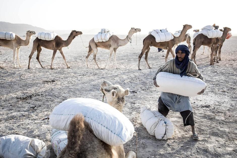 Ein Mann belädt ein Kamel mit großen Säcken gefüllt mit Salz.