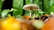 Pilze lassen es regnen