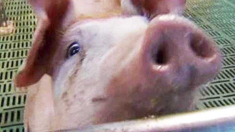 Weniger Fleischkonsum schont die Umwelt