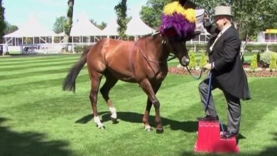 Hutmode auch für Pferde