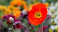 Graben für den Sieg: Die Royal Horticultural Society ruft zu den Spaten