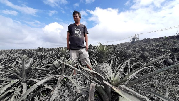 Vulkanasche vernichtet Ernte