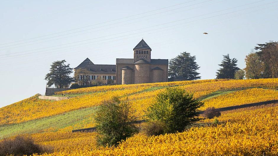 Blick auf Schloss Johannisberg: Hier wird das Rheingau Literatur Festival mit einem Auftritt von Jan Seghers eröffnet.