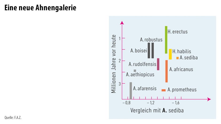 """Diverse Hominiden und ihre nach der Methode von Thackeray (siehe """"Statistische Definition einer Art"""") ermittelte morphologische Nähe zu A. sediba. Dabei steht A. für die Gattung Australopithecus und H. für die Gattung Homo."""