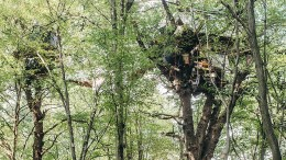 Öko-Kämpfer im Baumhaus