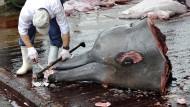 Australien kritisiert japanischen Walfang