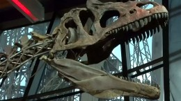 Zwei Millionen Euro für Dino-Skelett