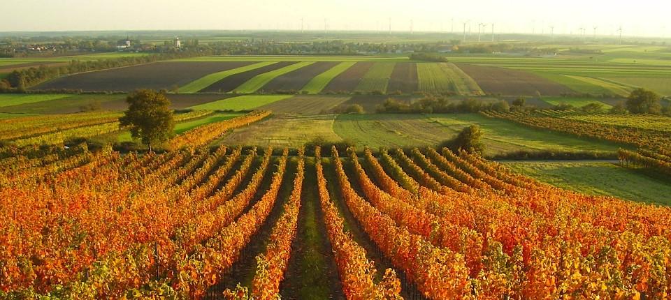 Die österreichische Rotweininsel Carnuntum Macht Sich International