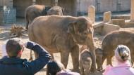 Zoobesucher vor dem Elefantengehege im Zoo in Hannover (Archivbild)