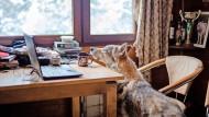 Christian Berge lebt mit Wolfhunden in seinem Zuhause in Buchholz-Aller und engagiert sich als Wolfsschützer. Die Tiere dürfen auch ins Wohnzimmer.