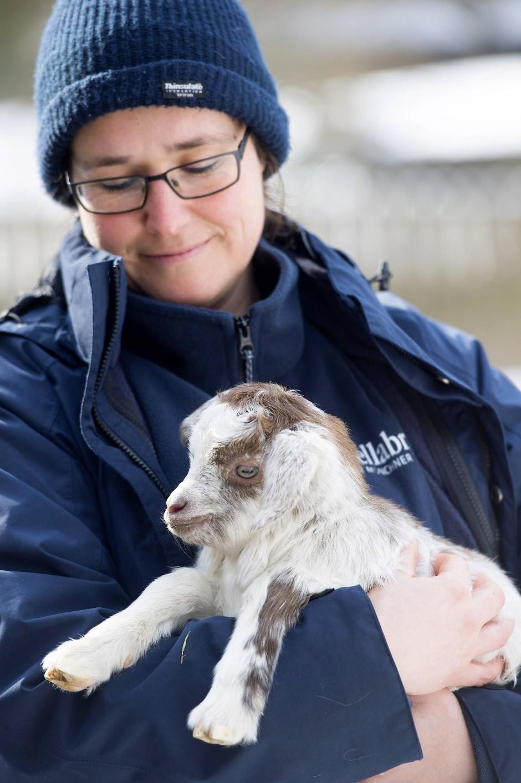 Anja Waldinger kümmert sich um eine vor drei Tagen geborene Girgentana-Ziege. Bald macht dem Tier die Kälte nichts mehr aus – der Pflegerin aber schon.