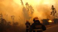 Regierung in Santiago ruft Notstand wegen Waldbränden aus