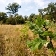 Nachgepflanzt: Millionen von jungen Eichen aus der eigenen Baumschule sind im Gebiet des Forstamts Hanau-Wolfgang in jüngster Zeit gesetzt worden